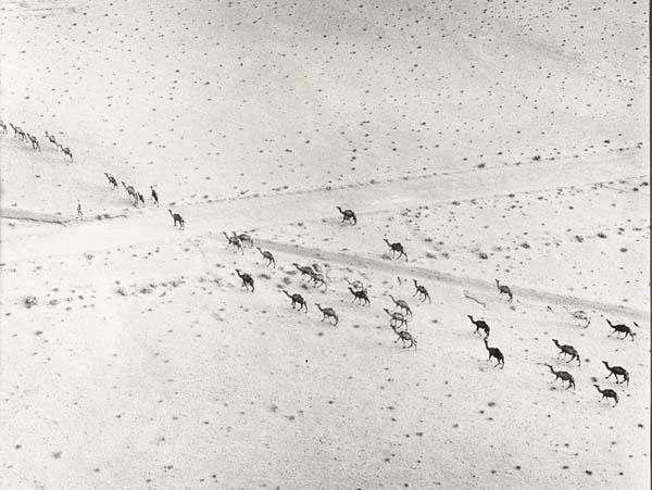 kamelen afrikaanse vrouw 2 works by sem presser