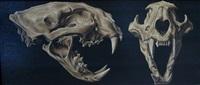 crânes de panthère (study) by etienne albin