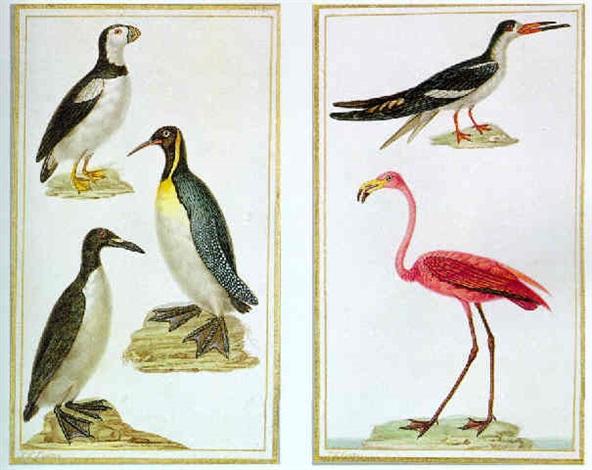 macaru moine manchot royal grand pingouin by jean gabriel prêtre