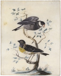 two exotic birds perched on a branch: a java sparrow with a lesser weaver by gerrit van bronckhorst