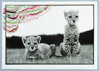 orphaned, cheetah cubs, mweiga, kenya by peter beard