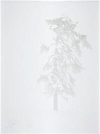 tree no.2 (from tree zone series) by nicolai howalt and trine søndergaard