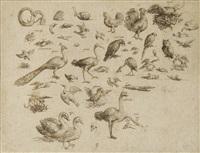 etudes d'animaux et d'oiseaux by albert flamen