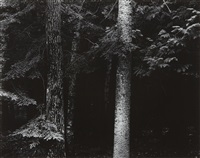 wisconsin by harry callahan