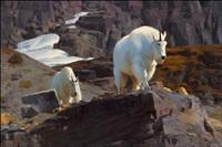 glacier surveillance crew by kyle sims