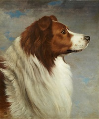 collie head by david johnson