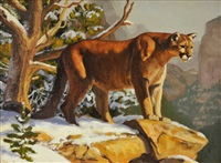 mountain lion by dave wade