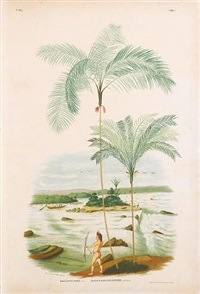 sertum palmarum brasiliensium ou relation des palmiers noiveaux du bresil, vol. 2 (bk by joao barboza rodrigues w/ 174 works, folio; after rodrigues) by jean goffin