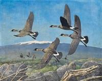 nene geese by peter markham scott