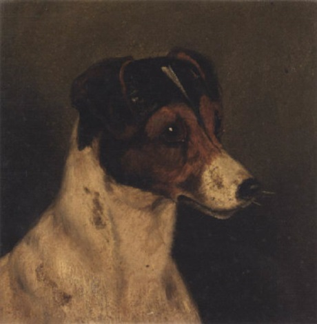head of a jack russel by edward aistrop