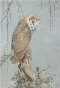 barn owl by winifred marie louise austen