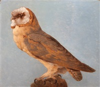 barn owl by hendrik pieter koekkoek