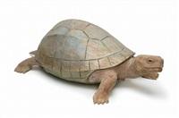 turtle by yoshimasa tsuchiya