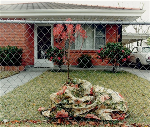 floral blanket metairie la from the homefront series by william greiner