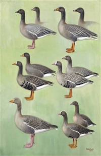 grey geese by peter markham scott