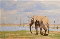 bull elephant, kariba, zimbabwe by kim donaldson
