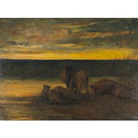 lions drinking - sunset, on the veldt by john macallan swan