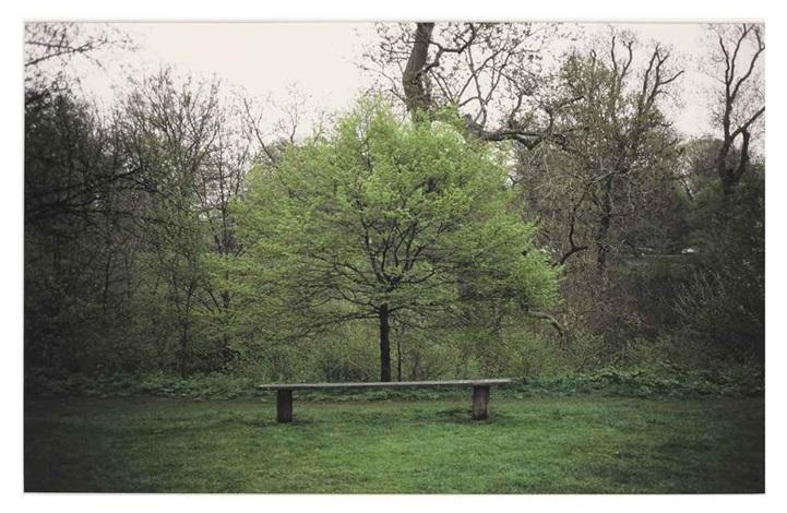 tree bench by gabriel orozco