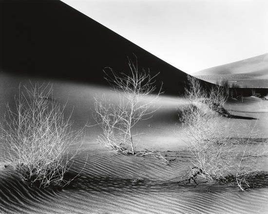 dunes with bush by brett weston