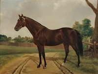 'musket,' sire of 'carbine' by m. scott