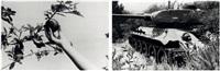 the prograsive development plan apple/hand (+ tank/foliage; 2 works) by mustafa hulusi