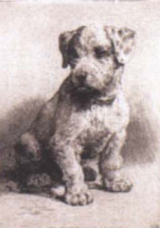 Study Of A Sealyham Puppy By Herbert Thomas Dicksee
