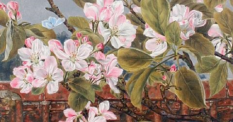 apple blossom and butterfly by rosa brett