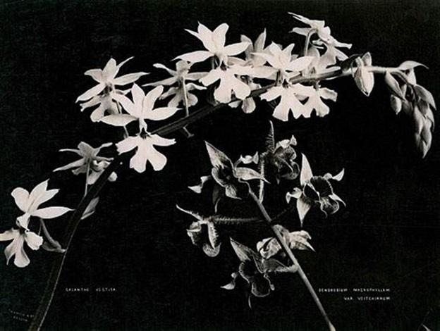 nature morte de fleurs another 2 works by charles t scowen scowen co