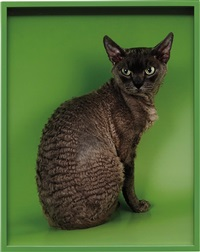 devon rex by elad lassry