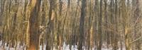 karlı orman by azade köker