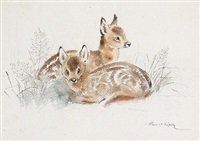 fawns resting in the scrub (+ lone fawn, irgr; 2 works) by eileen alice soper