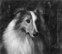 portrait of a collie by franklin whiting rogers