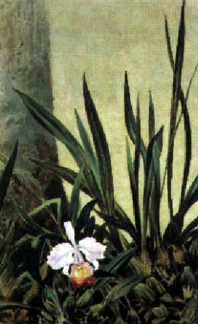 orquídea by gonzalo ariza
