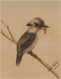 kookaburra (+ kingfisher; 2 works) by neville william cayley