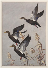 black mallards by bruno ertz