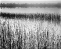 reeds in pond by brett weston