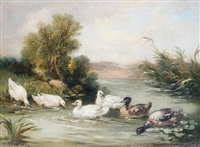 ducks in a pond by louis marie lemaire