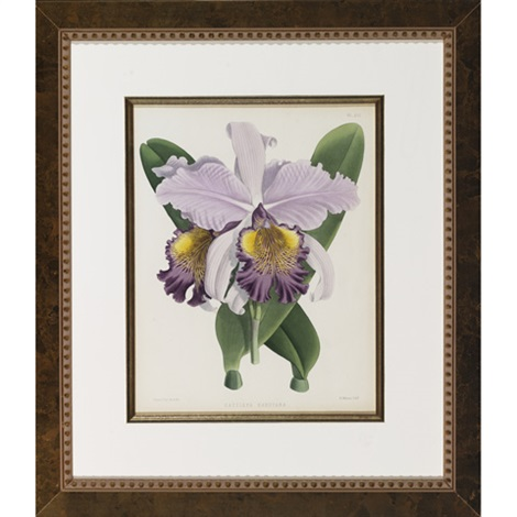studies of orchids anguloa ruckeri 2 others 3 works by walter hood fitch