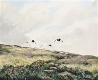 the grouse moor by berrisford hill