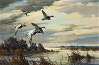 winging in - canvasbacks by harry curieux adamson
