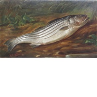 trout by wakeman holberton