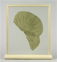 lotus leaf by gabriel orozco