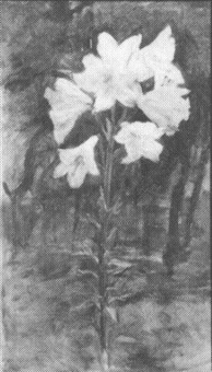 lillies by ellen day hale