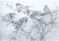 a study of tree sparrows by winifred marie louise austen