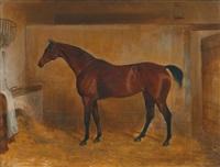 ein brauner vollblüter im stall by william webb