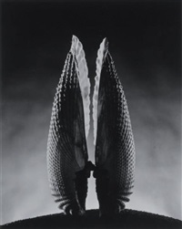 angel wing by ruth bernhard