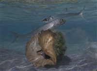 lady fish and a sinistral conch by stanley meltzoff