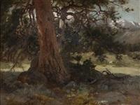 the old spruce by hamilton hamilton