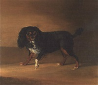portrait of a cavalier king charles spaniel by g. jackson