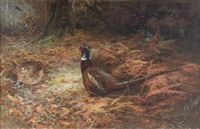 pheasants in undergrowth by charles whymper